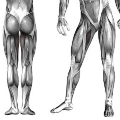 Анатомия минимум за йога учители